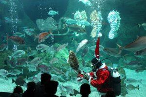 CretAquarium feeding the fish