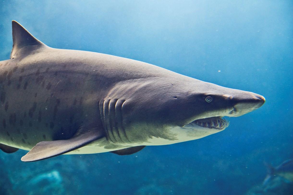 CretAquarium sharks
