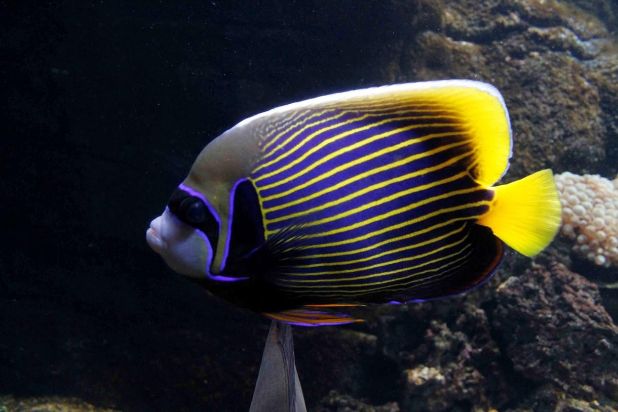 CretAquarium tropical fish