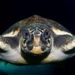 CretAquarium turtle