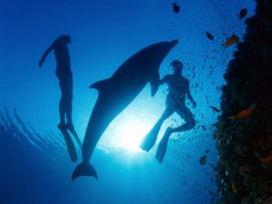 crete scuba diving with dolphins