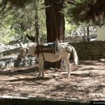 donkey-in- samaria gorge