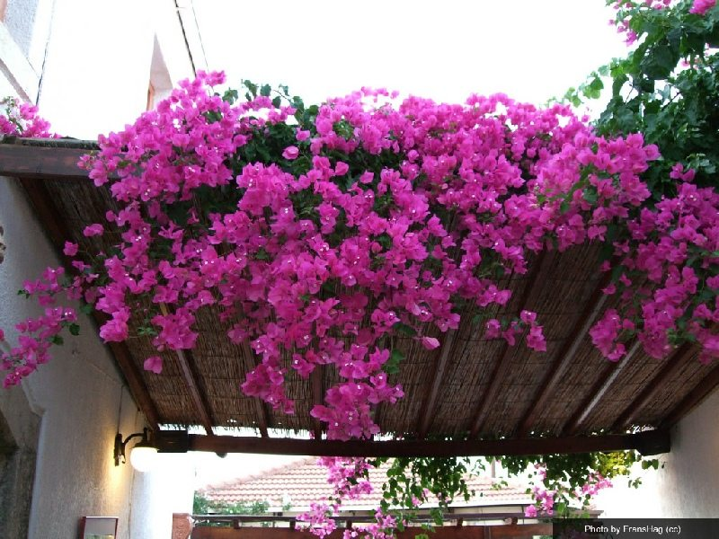 flowers-of-koutouloufari