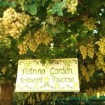 Petrino Garden