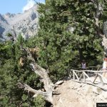 Stunning views in Samaria Gorge