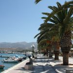 sitia-palm-trees